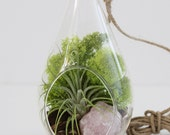 Air Plant + Single Stone Terrarium Kit with Chartreuse Moss || Hanging Teardrop