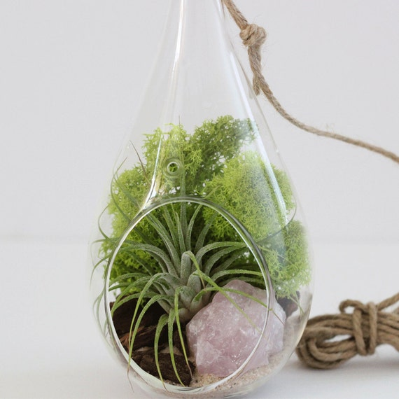 Air Plant + Rose Quartz Air Plant Terrarium Kit with Chartreuse Moss || Hanging Teardrop