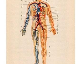 Human heart, anatomical heart anatomic heart diagram print anatomy wall hanging wall art medical student gift