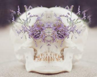 Cráneo IV - Surreal Skull Photography, Still Life Fine Art Photo, Feminine Art, Floral, Kawaii Pastel Decor, Photo Manipulation, Photo Gift