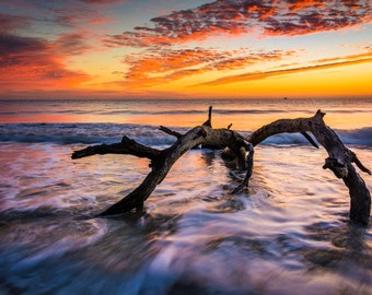 Tree and waves in the Atlantic Ocean at sunrise at Driftwood Beach, Jekyll Island, Georgia - Photography Fine Art Print or Wrapped Canvas