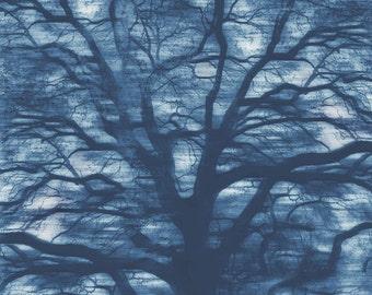 Abstract Tree Art, Surreal Tree Photo, Sublime Tree, Blue Tree art, Tree Photo Collage, Live Oak Photo, Abstract Blue Tree, Sepia Tree Art