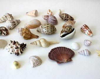 Seashell Collection Variety