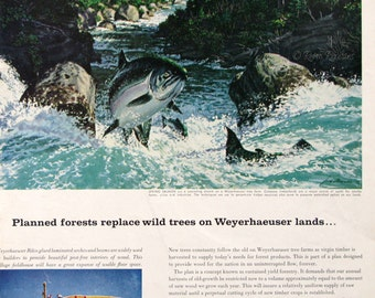 1961 Weyerhaeuser Timber Ad - 1960s Fish Illustration - Salmon Swimming Upstream - Jack Dumas Wildlife Art - Outdoorsy Art Print