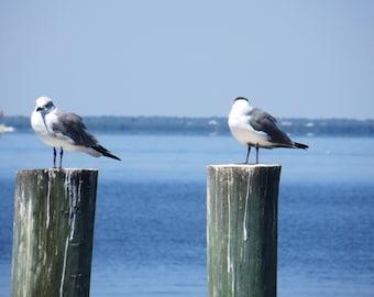 Birds on the Beach Print, Gull-billed Tern Birds Print, Beach Photo, Nature Photography, Beach Fine Art Print