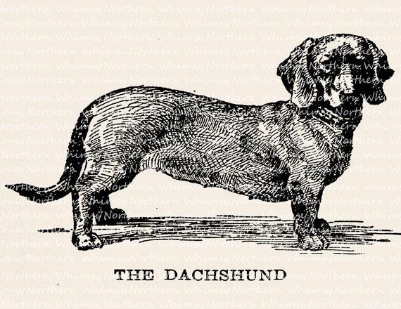 Line Drawing Dachshund : Dog clip art dachshund vintage dachschund