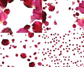 4 PNG Rose Flower Petals Falling Overlays