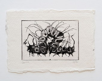 caterpillar - original handpulled etching - black and white - insect - illustration
