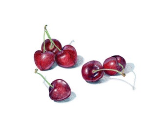 Bing Cherries drawing / Archival print of colored pencil drawing / food illustration / kitchen art
