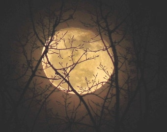 Caught in the Trees (Landscape, Nature, Moon, Fine Art Photography)
