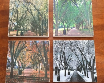 4 Seasons of New England Nature Photography Prints on 8x8 Canvas
