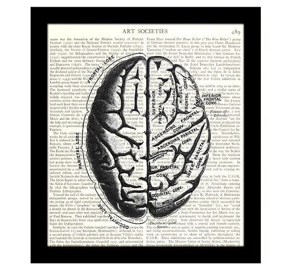 brain dictionary art print 8 x 10 diagram of human brain. Black Bedroom Furniture Sets. Home Design Ideas