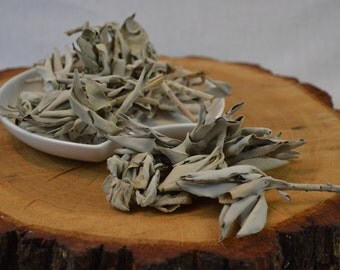 White Sage (Salvia alpine) Leaves and Clusters- Blessings, Clear Negative Energies, Smudge, Energy Healing