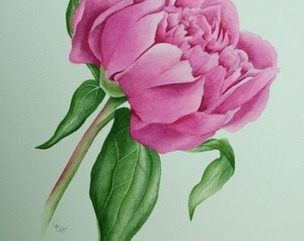 Commission a flower portrait painting in watercolour. Original painting of your choice.