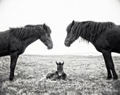 Horse Photograph, black and white horse photography - 8x10 horse photo, family baby parents nursery