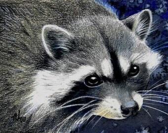 Raccoon Wildlife Art Melody Lea Lamb ACEO Print #313