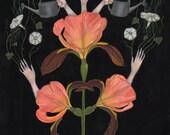 Reaching Irises - Print