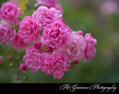 The Fairy Rose - Photo Greeting Card