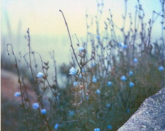 Blue Wildflowers on Foggy Coast - Polaroid Photo Print of Blue Flowers and Rock - Nature Photography - Seaside Wildflower