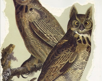 Great Horned Owl Audubon Print for Paper Arts, Collage, Scrapbooking and MORE PSS 2201