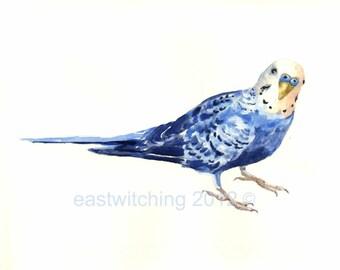 Watercolo BUDGERIGAR Print, budgie, blue bird, budgie lover gift, bird paintings