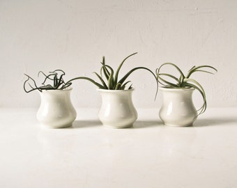Restaurant Creamers, 3 White Pitchers, Air Plant Planters