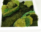 Moss wall decor, Greening of Vale