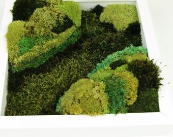 SALE Moss wall decor, Greening of Vale