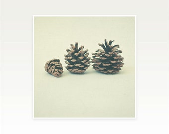 Autumn Photography, Fall Decor, Autumn Pine Cone Photo, Minimal Rustic Still Life, Neutral Wall Decor - October