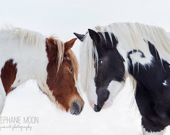 Horse Photography, Horse Detail, Valentine's Day, Gypsy Vanner, horse photography, fine art equine photography, Horse Print, Horse Picture