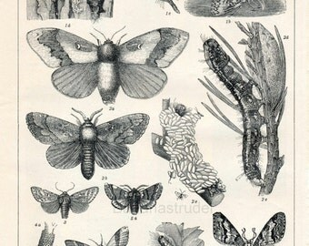 1894 Back-to-back Antique German Engraving of Destructive Forest Insects