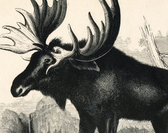 1840s-1850s Antique Engraving of the Elk