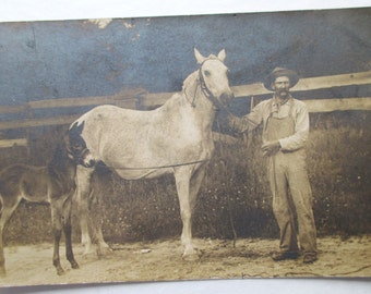 RPPC Real Photo POSTCARD of MULE and Foal, Early 1900's Rural Americana