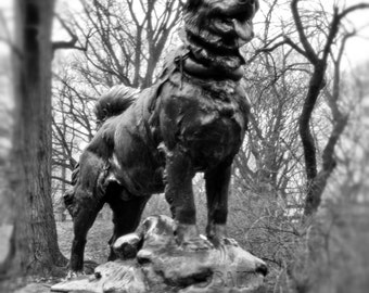 """New York City Photography - """"Balto"""" 11x14 Print, Matted to 16x20 - fits in standard frame"""