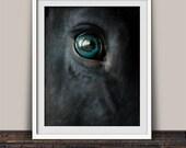 Intense Eyes Black Horse Fine Art Photography Print