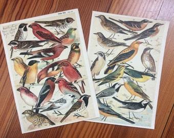 1904 set of 2 bird prints original antique ornithology print color lithograph - song birds finch cardinal oriole