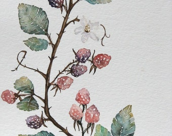 Bespoke Blackberry Botanical Quaker Wedding Certificate