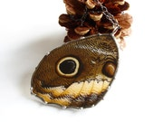 Real Butterfly Jewelry, Owl Butterfly Pendant,  Butterfly Wing Necklace