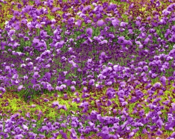 Danscape Violet Garden - RJR Fabric -  Half Yard