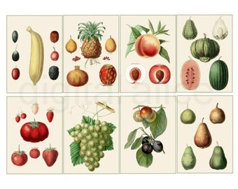Antique BOTANICAL FRUIT PRINTS - Digital Download Cards Atc ACeO Trade Cards -  Instant Printable - All Fruits