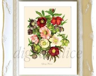 Antique BOTANICAL FLORAL Print Download - SPRINg BOUQUET -Instant Digital Download Printable, Digital Image,Print, cards,Flowers