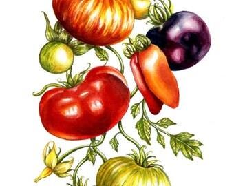 Tomato Vine Print