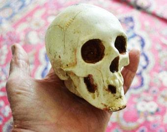 Disneyland Skull, Vintage Randotti