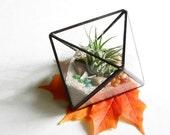 Small Air Plant Terrarium, Glass Octahedron Terrarium Planter