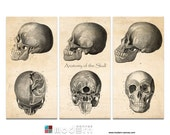 Anatomy of the Skull Triptych- Vintage Reproduction - 36x24 Canvas Giclee