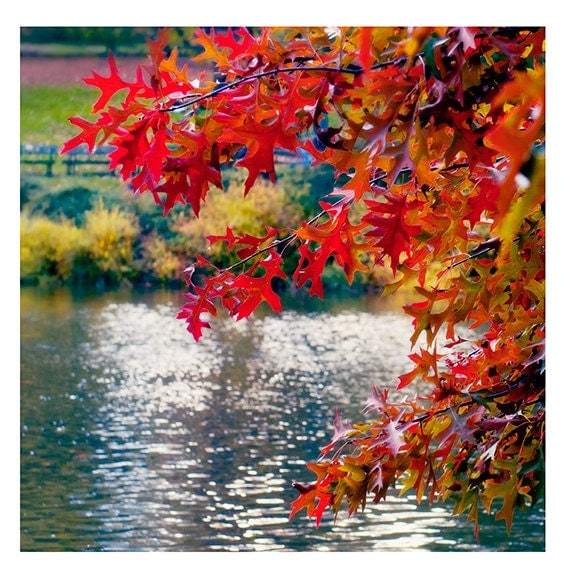 Landscape Photography- Fine Art Photography- Fall Color- Central Park- Fine Art Print