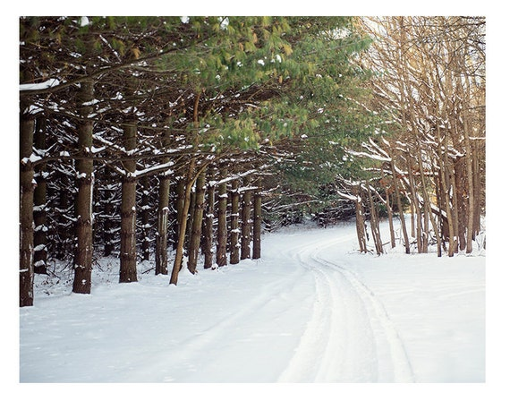 Art, Nature, Photography, Landscape, Ski Lodge, Winter,Nature, Print, Wall Art, Home Decor, Snow, Country lane, Pines, 8x10 and larger print