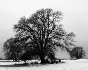 Winter Tree / Snow / Fine Art Photograph