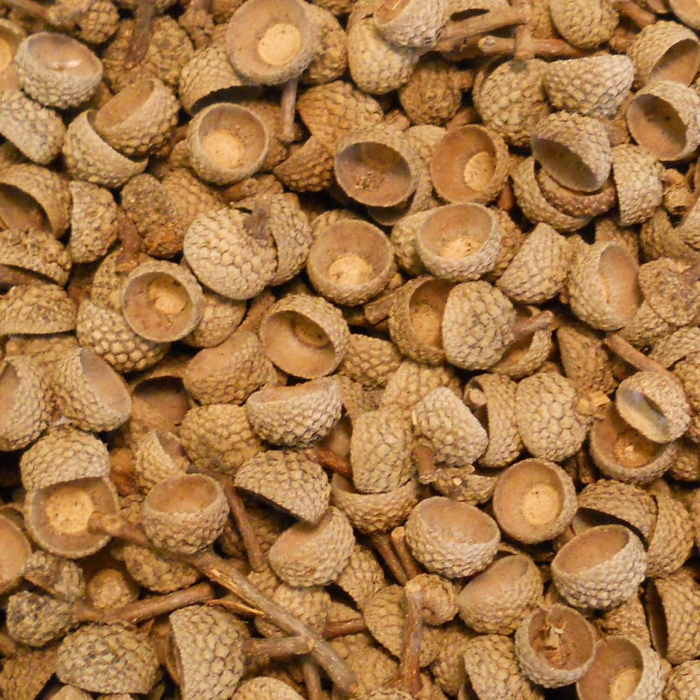 Deep cap white oak acorn caps small natural tops