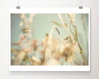 wild flower photograph summer photograph nature photography pastel home decor gold home decor summer print botanical print